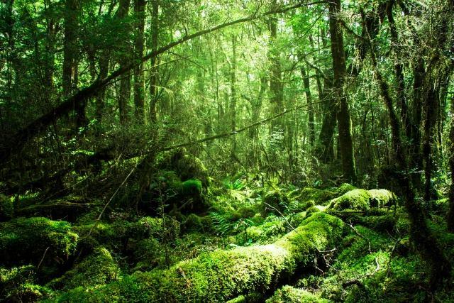 深い森の画像